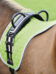 Lunging & Horsemanship