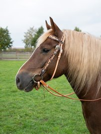 Western Headstall Roswell