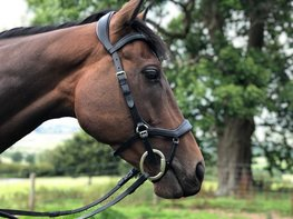 Anatomic Comfort Bridle