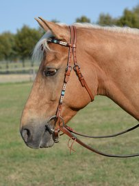 Western Headstall Dakota | from size PONY |