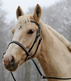 | Jaw-crossed | Kifrahorse Vie op=op