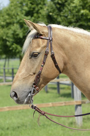 Western Headstall Badger