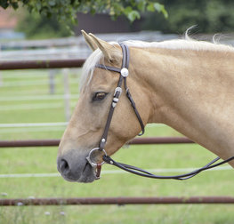 Headstall Colt Silver with Reins