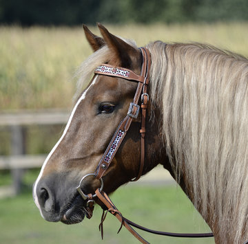 Headstall Indian Dream